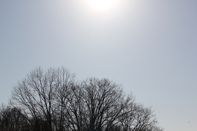 spring sunshine in Toronto