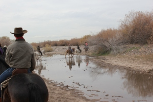 The calm horseback ride